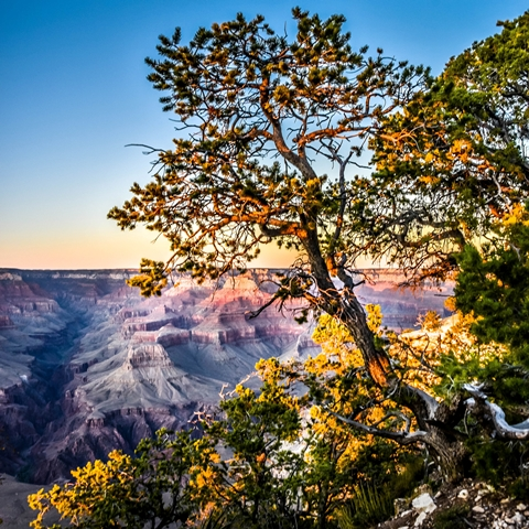 grand canyon sunset 001 480 480